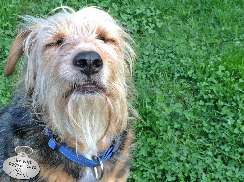 Photo  The Wishing Dog