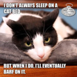I Don't Always Sleep on a Cat Bed #MostInterestingCatInTheWorld