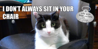 I Don't Always Sit In Your Office Chair #MostInterestingCatInTheWorld