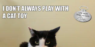 I Don't Always Play with a Cat Toy #MostInterestingCatInTheWorld