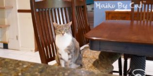 Haiku by Cat: Anticipation
