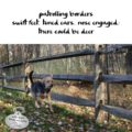 patrolling borders / swift feet , tuned ears, nose engaged / there could be a deer #haikubydog #micropoetry