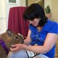 Susan C. Willett meets Mia the capybara