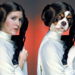 May the 4th Be With You: A look back at the creation of The Dogs of Star Wars